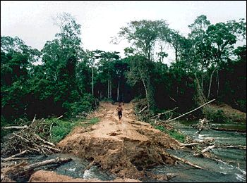 deforestacionbrasil